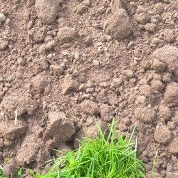 25kg Bag Top Soil
